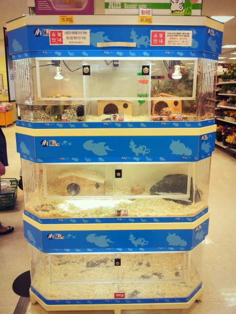 Emart pet aisle