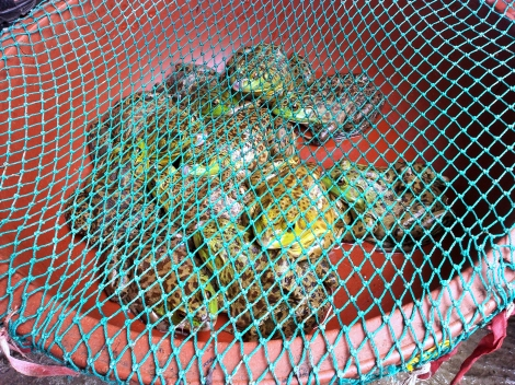 Pet toads at Dongnae Market