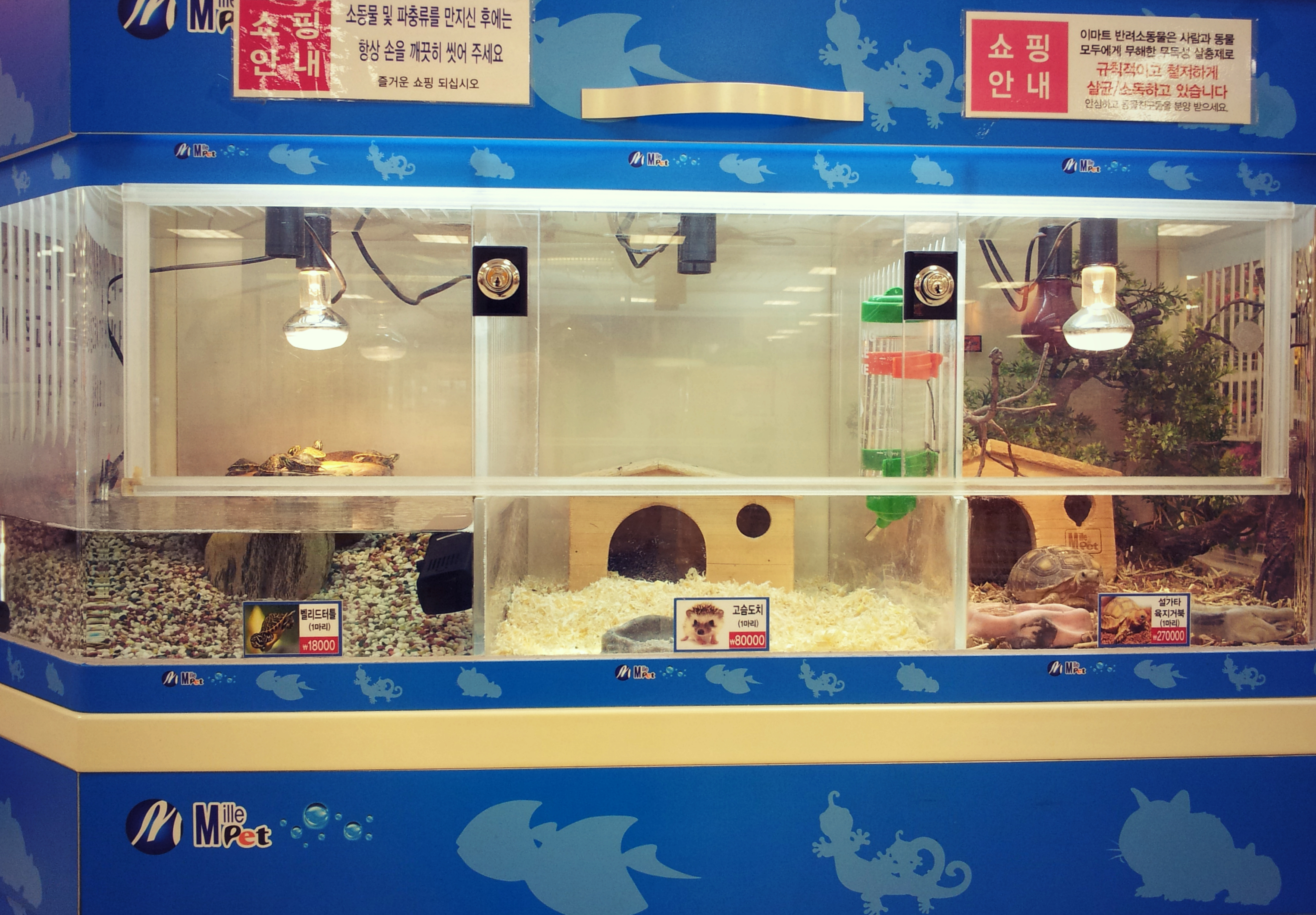 Pet Stores Sell Dogs Jacksonville Florida